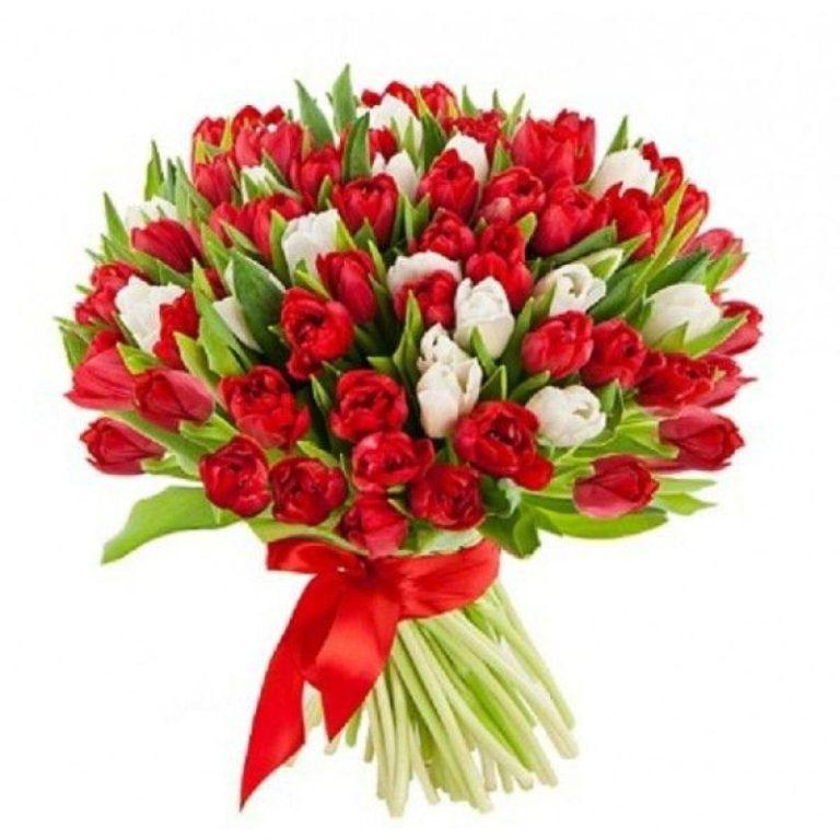 букет из 101 тюльпана красного и белого цвета