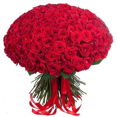 Букет из 101 розы Red Naomi красного цвета