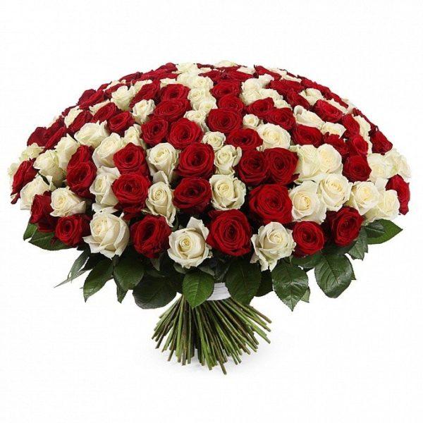 Букет из 201 белой и красной розы