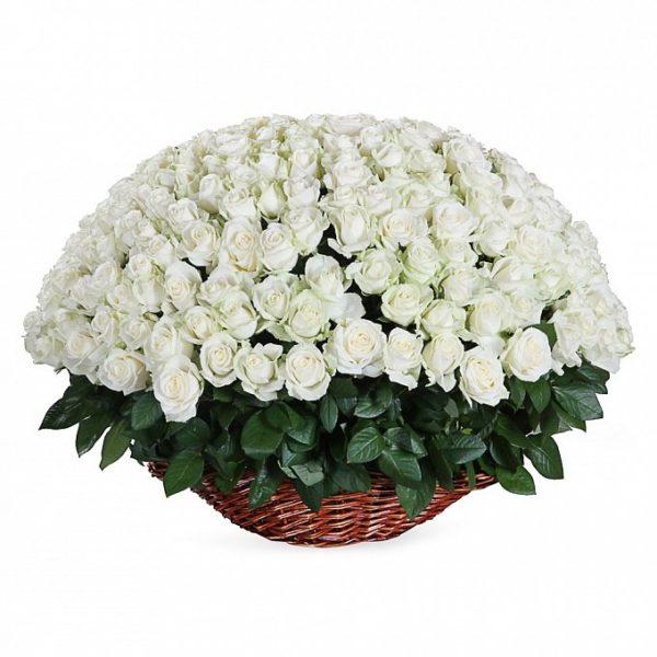 251 роза белого цвета в корзине