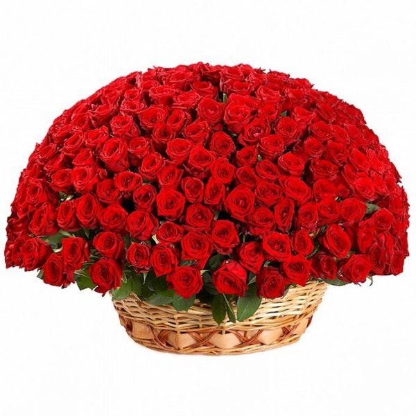 251 роза красного цвета в корзине