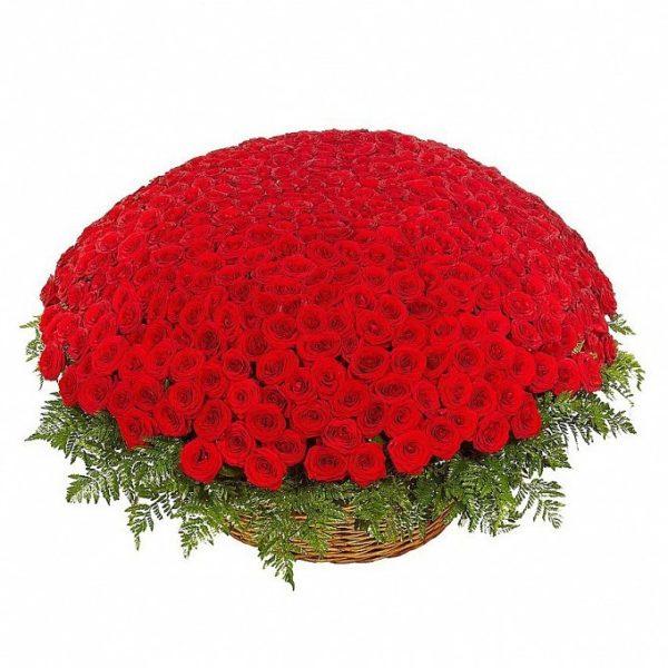501 роза красного цвета