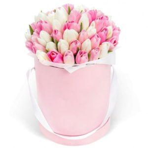 51 тюльпан белого и розового цвета в коробке