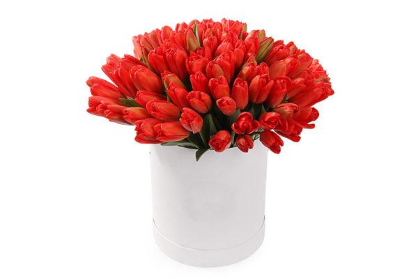 75 тюльпанов красного цвета в коробке