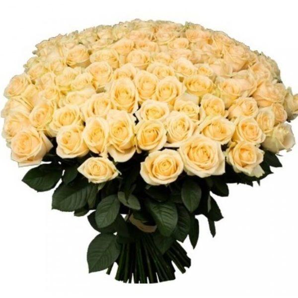 Букет из 101 розы кремового цвета
