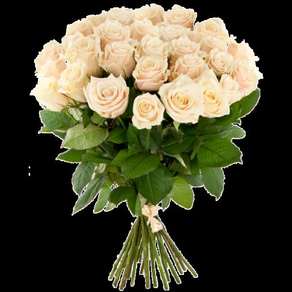 25 роза Avalanche Peach кремового цвета