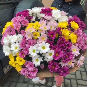 Букет из 51 кустовой хризантемы разного цвета с доставкой