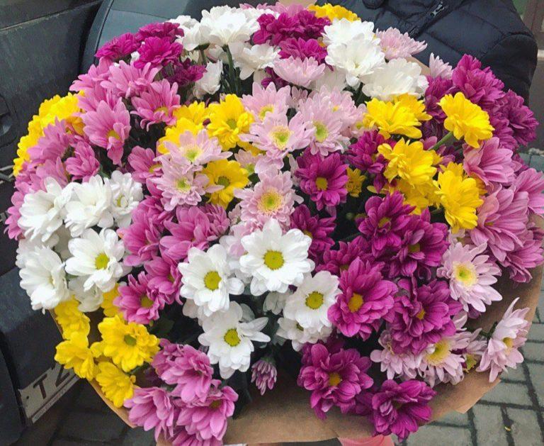 Букет из 51 кустовой хризантемы разных цветов