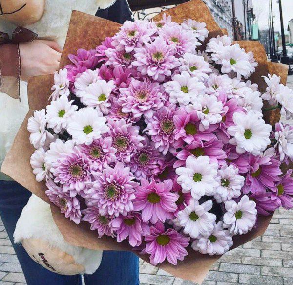 Букет из 25 кустовых хризантем бело-розового цвета