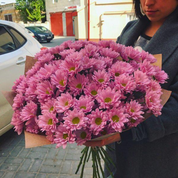 Букет из 15 хризантем бело-розового цвета
