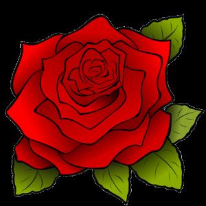 Роза maxi-flowers.ru