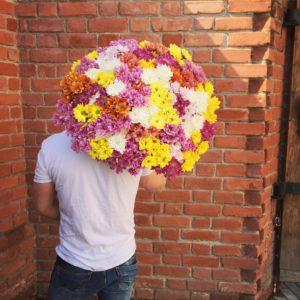 Букет из 51 кустовой хризантемы