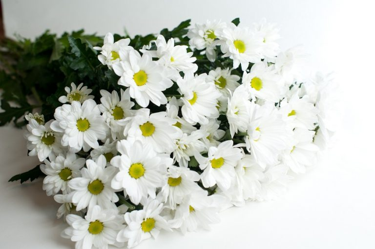 Букет кустовых хризантем белого цвета