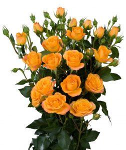 Кустовая роза оранжевого цвета
