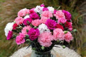 Букет из гвоздик разнообразной расцветки