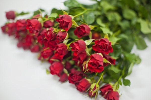 Кустовая роза красного цвета