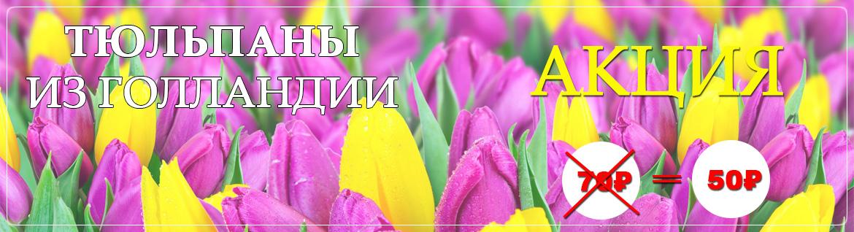 Тюльпаны из Голландии купить во Владимире